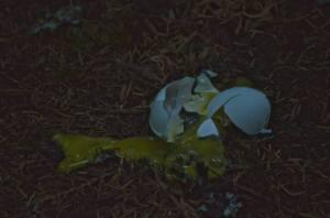 Poor dead egg